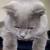 Profilbild von Teddy
