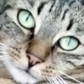 Profilbild von Leylah