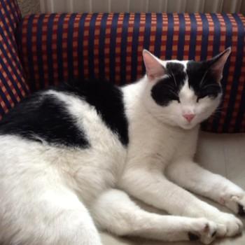 Profilbild von Kitty
