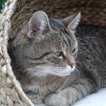 Profilbild von Trixy