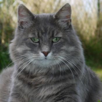Profilbild von Romeo II.