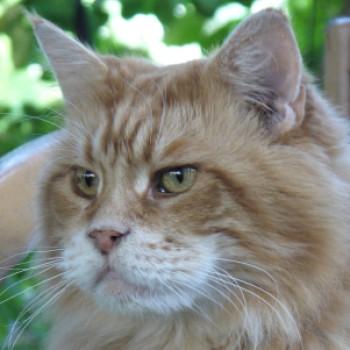 Profilbild von † Fuego