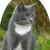 Profilbild von Nico-Blaubär