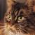 Profilbild von † Nicki