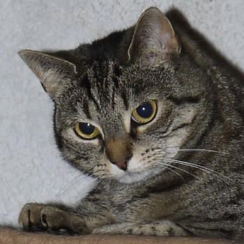 Profilbild von Tiger