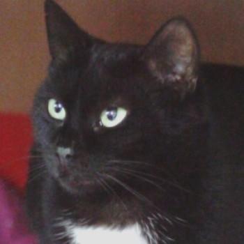 Profilbild von Darko