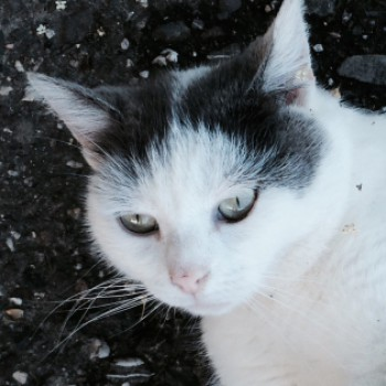 Profilbild von † Pucki