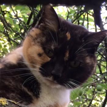 Profilbild von Samantha