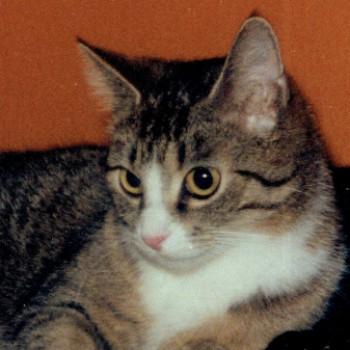 Profilbild von † Tony