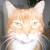 Profilbild von † Lucky hinterm Regenbogen