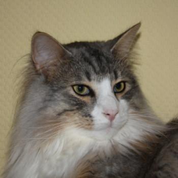 Profilbild von Sid