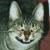Profilbild von † Chico