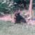 Profilbild von † Miez