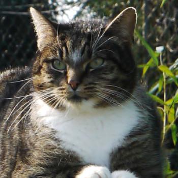 Profilbild von † Yannick