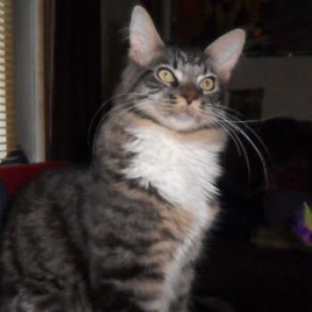 Profilbild von Mighty
