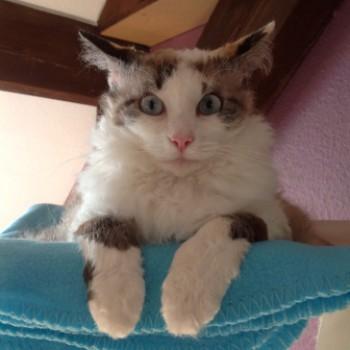 Profilbild von Merle