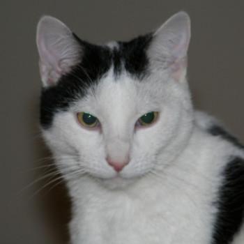 Profilbild von TiTo