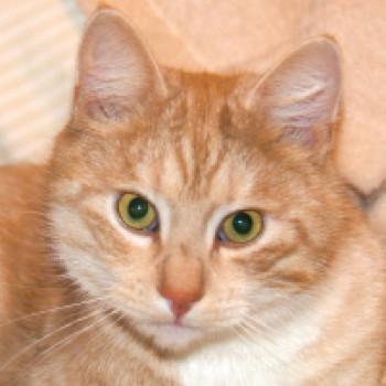 Profilbild von Sjampis