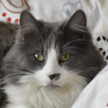 Profilbild von Lily