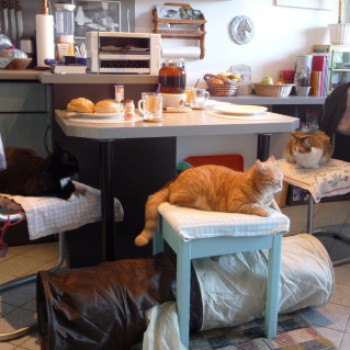 Profilbild von Katzen-WG Bargteheide: Donna, (He)Lena, (Tina), (Prissy), (Tinky)