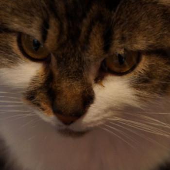Profilbild von Lulu