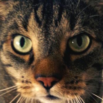 Profilbild von Caipi