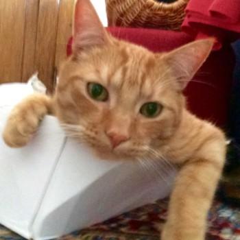 Profilbild von Garfield