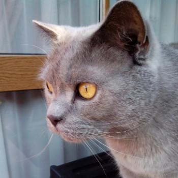 Profilbild von Willi