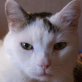 Profilbild von † Tapsi