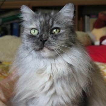 Profilbild von Tessa