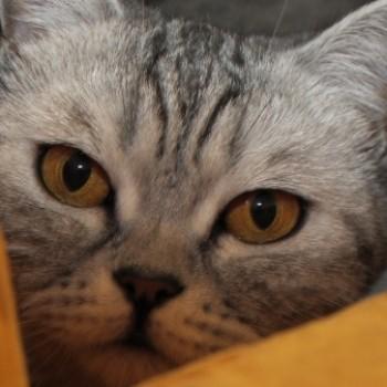Profilbild von Peach