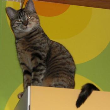 Profilbild von Maja