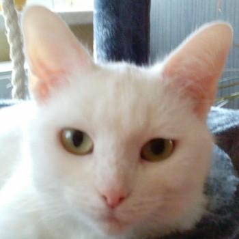 Profilbild von Bindie