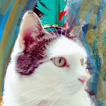 Profilbild von Finni