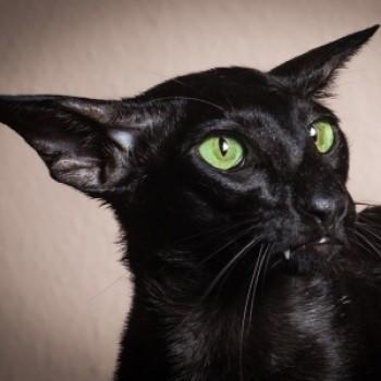 Profilbild von Luzifer