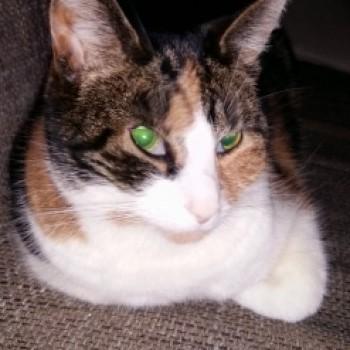 Profilbild von Püppi