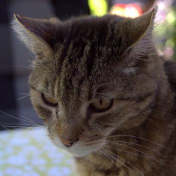Profilbild von Max, der Schlitzohrige