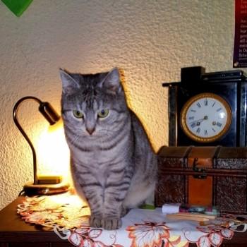 Profilbild von Trixie