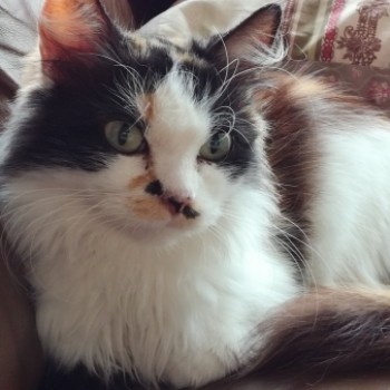 Profilbild von † Morgana