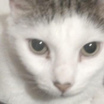 Profilbild von Diesel