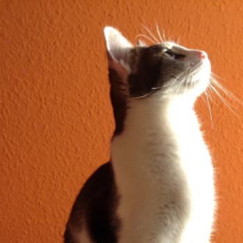 Profilbild von Filou