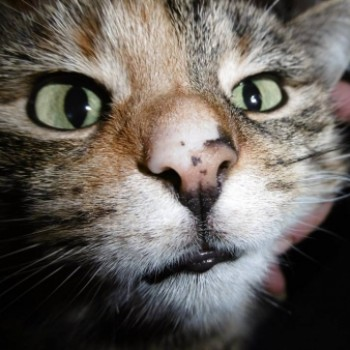 Profilbild von Melissa