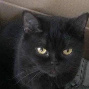 Profilbild von Sinchen