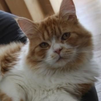 Profilbild von Morpheus