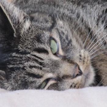 Profilbild von Miezi