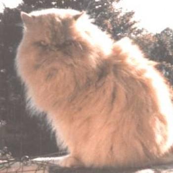 Profilbild von Gizmo