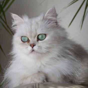 Profilbild von † Luna