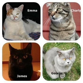 Profilbild von James,Emma,Charly&George
