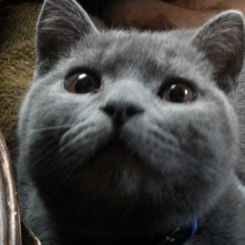 Profilbild von Bob