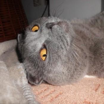 Profilbild von Casper